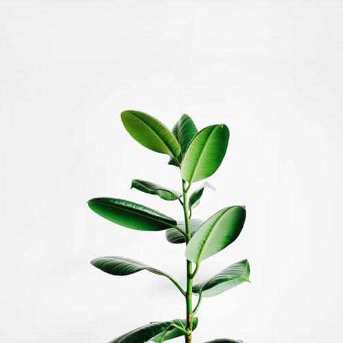 Minimalist Plants